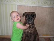 Собаку в добрые руки