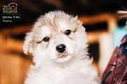 Красивая девочка-щенок ищет дом!